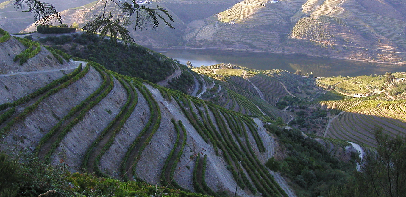 Douro - vineyards and river Douro