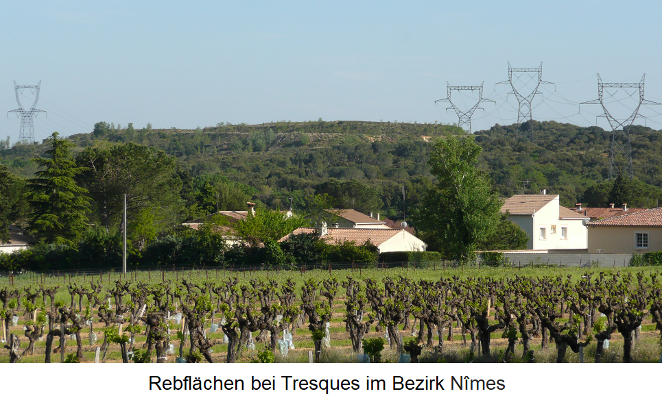 Vineyards near Tresques in the district of Nimes