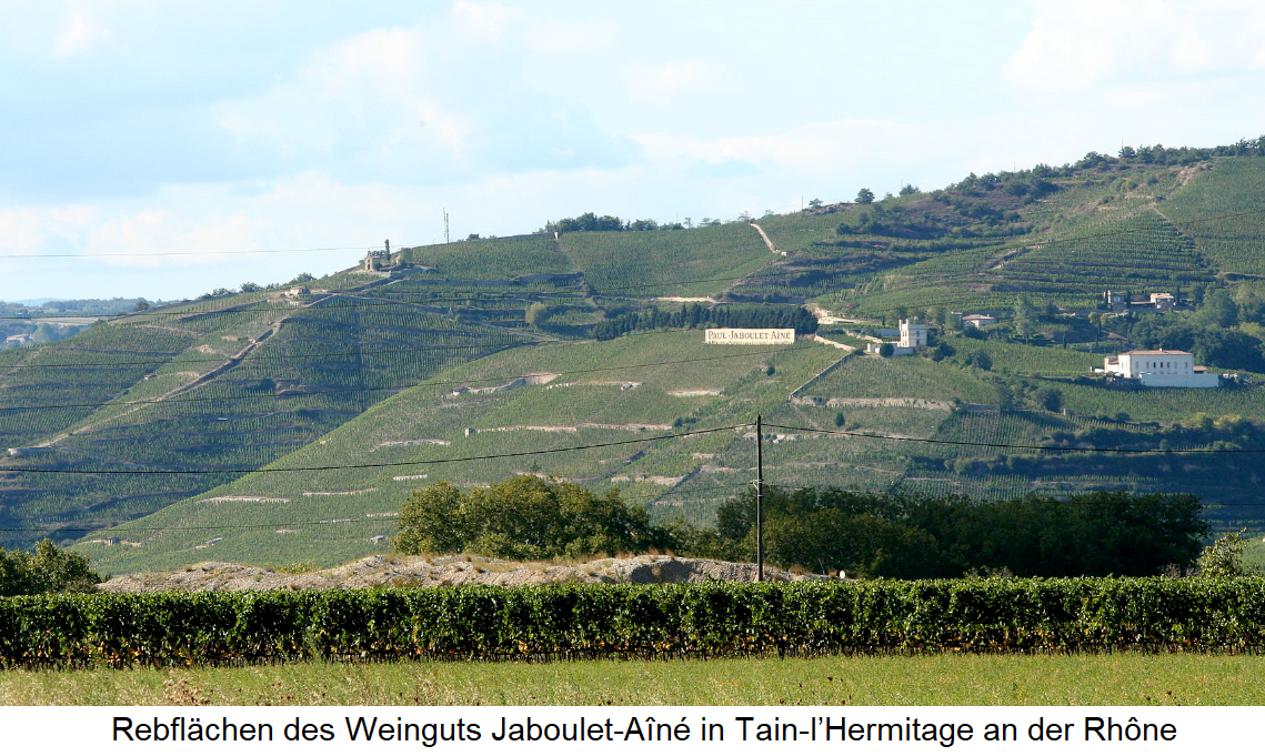 Vineyards of the Jaboulet-Aîné winery in Tain-l'Hermitage on the Rhône