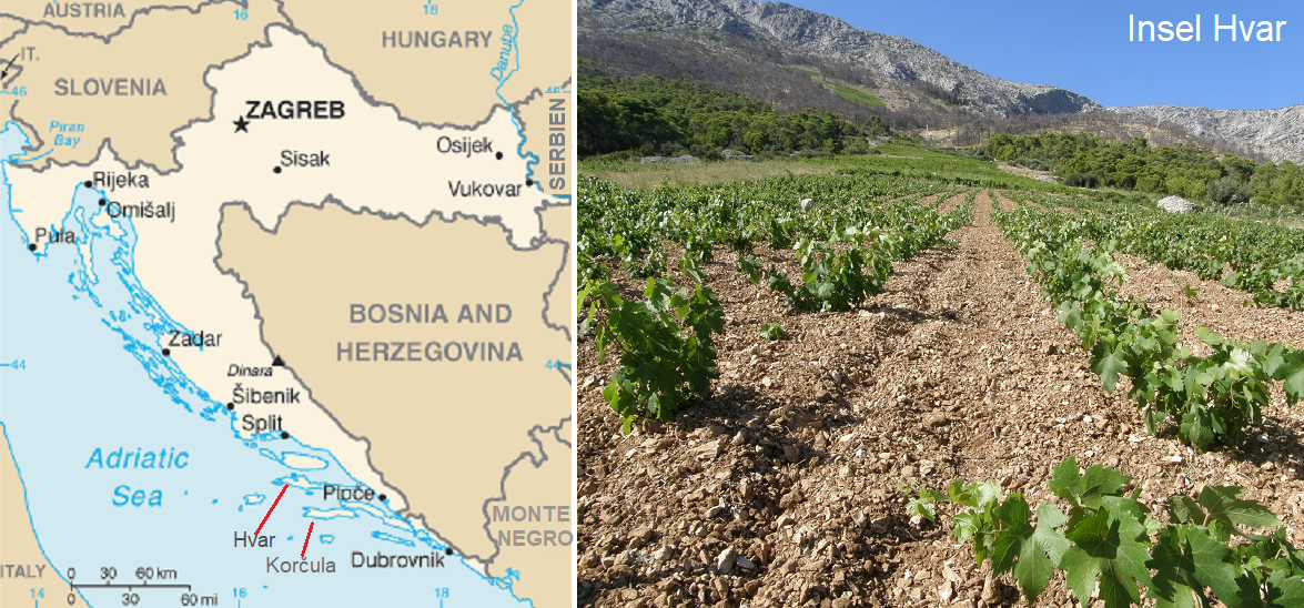 Croatia - Map and vineyards on the island of Hvar
