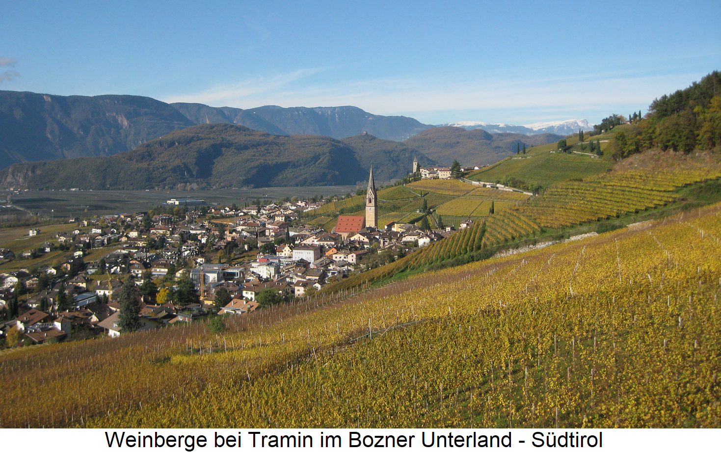 South Tyrolean - Vineyards near Tramin in the Bozner Unterland